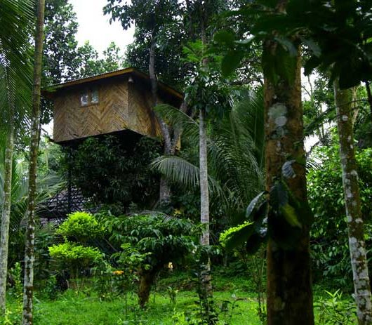 Tree House Wayanad